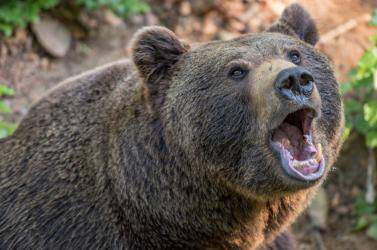 BORZALOM: Gyerekek szeme láttára téptek szét egy 11 éves fiút az állatkerti medvék